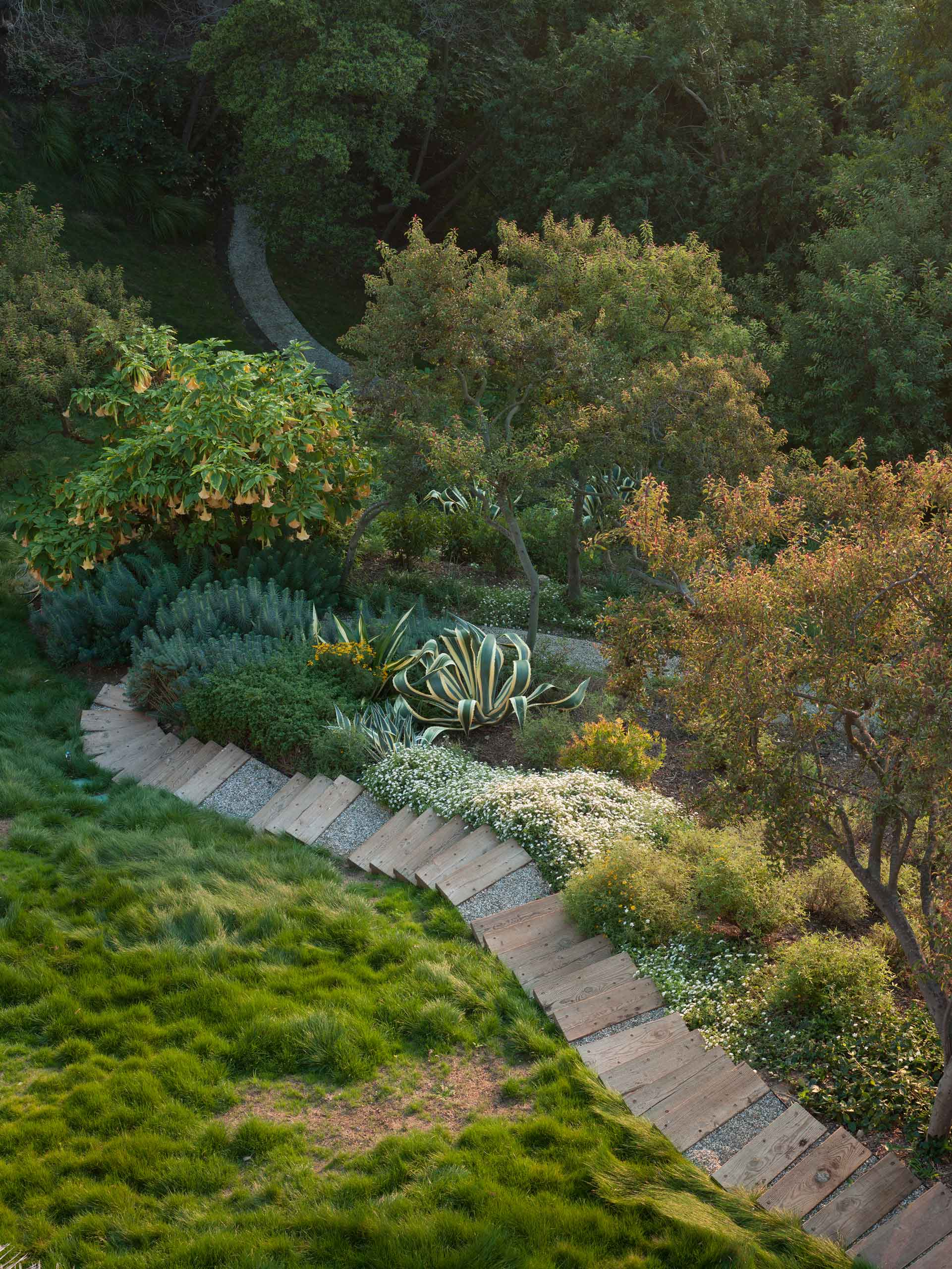 stepped path through garden with large agave