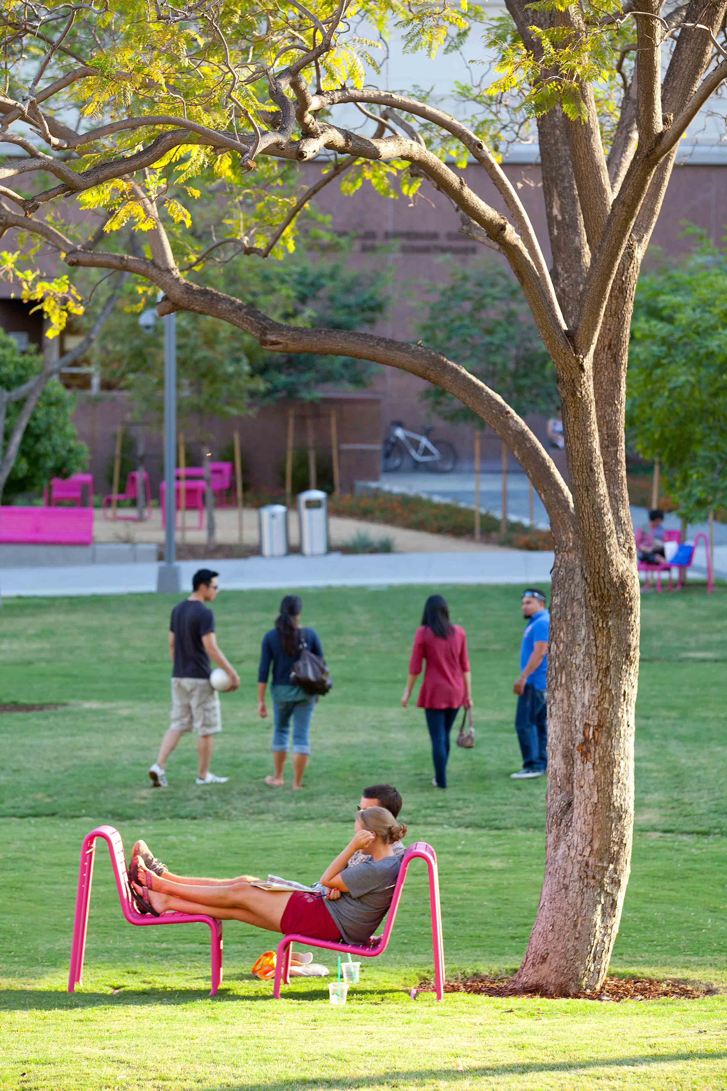 people seated in pink chairs under a tree on a grassy lawn with people walking in the background