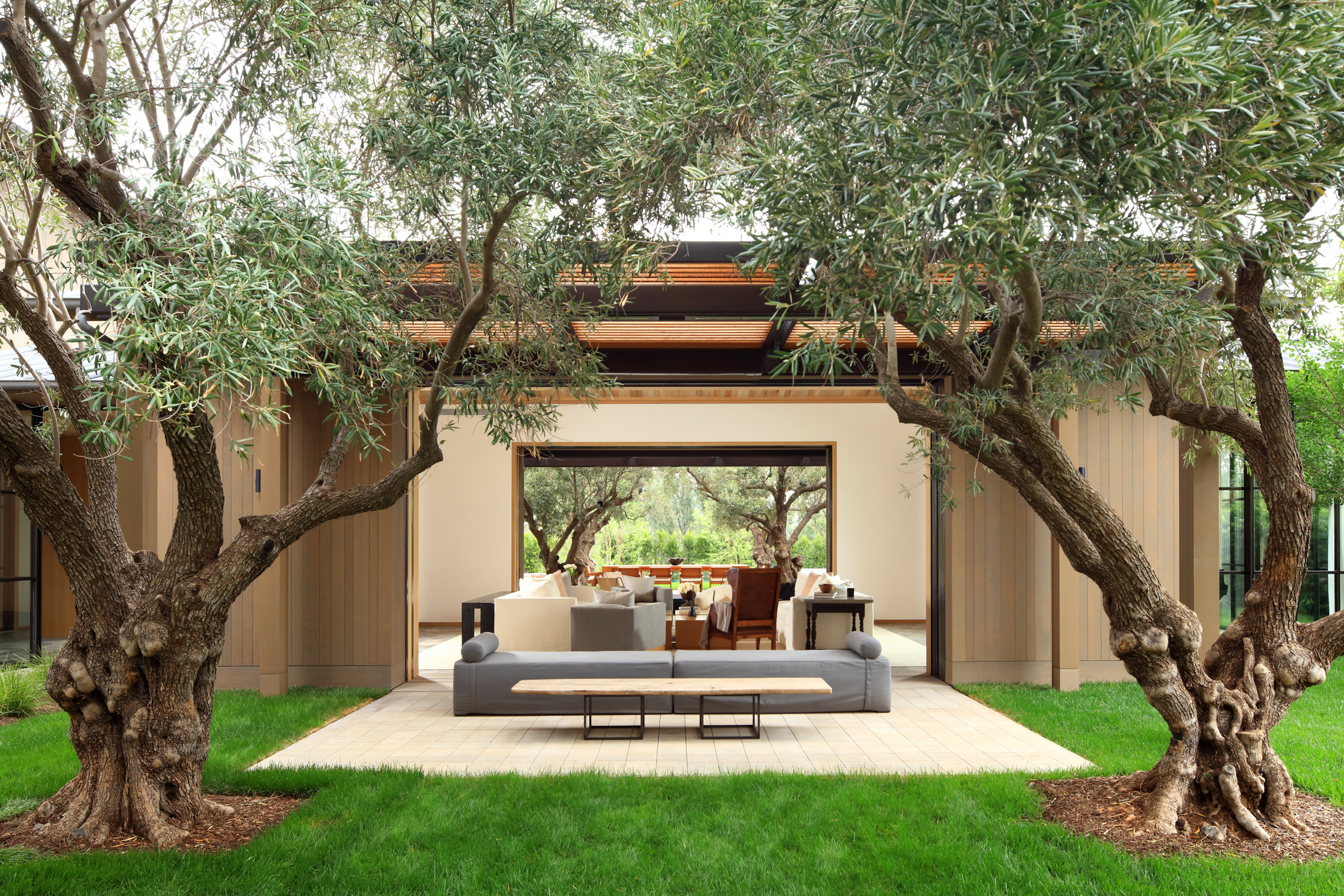 outdoor lounge area with couch under olive trees