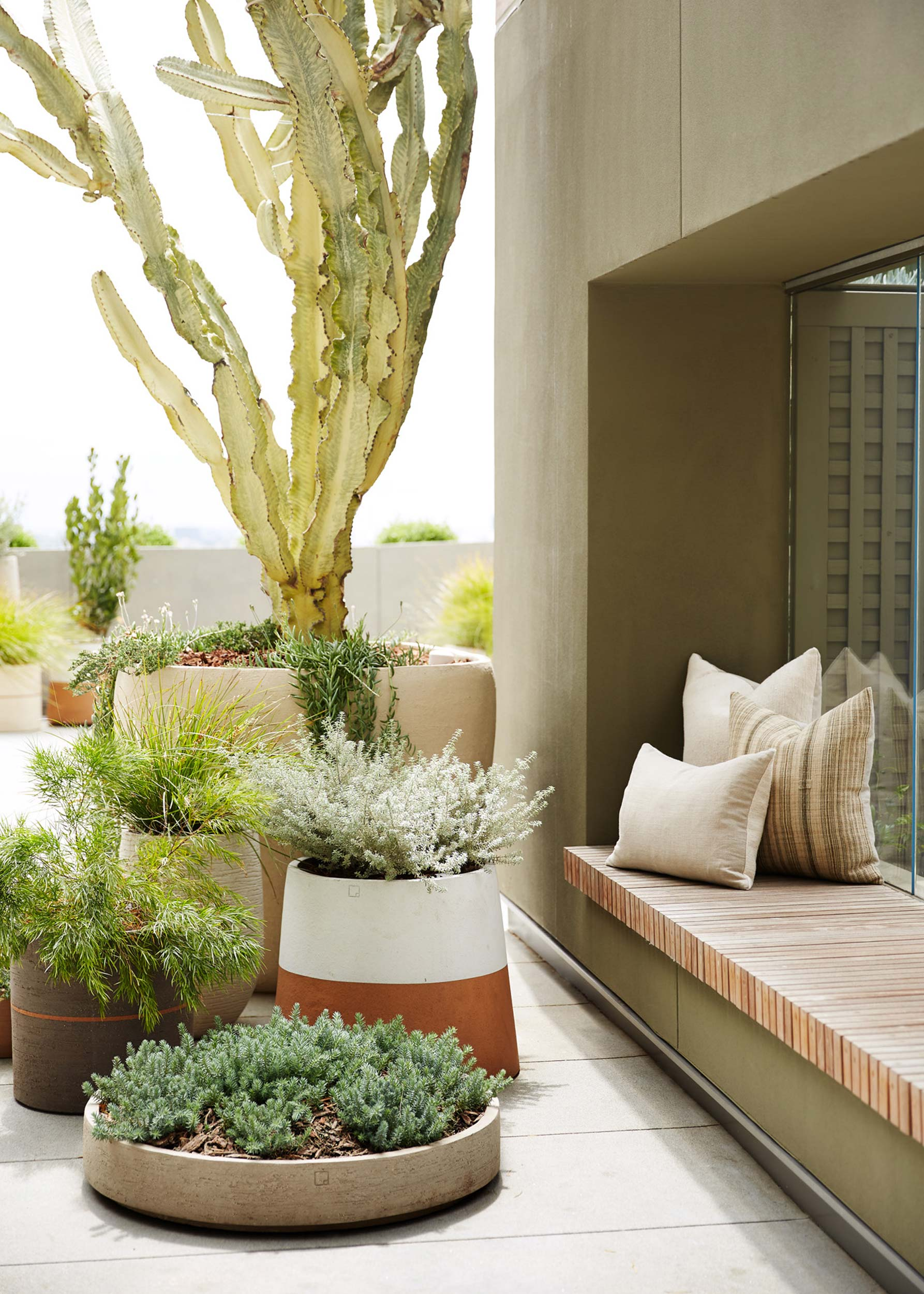 cactus in beige cermaic planters by wooden bench