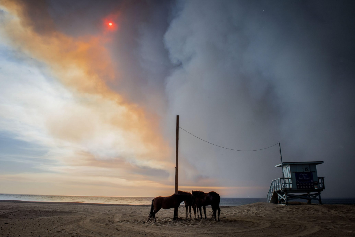 Horses evacuated from the Woolsey Fire tied up at Zuma Beach, Malibu, CA