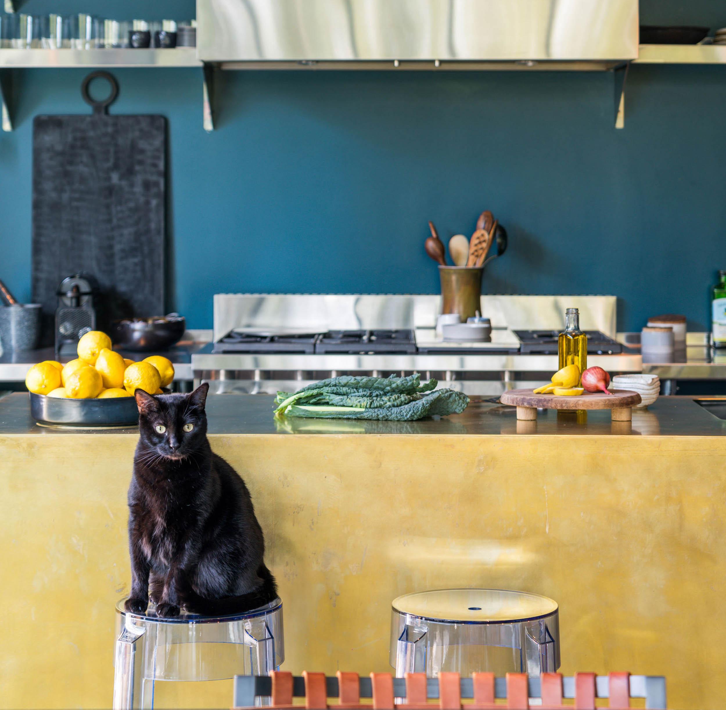 cat sitting on stool in modern kitchen