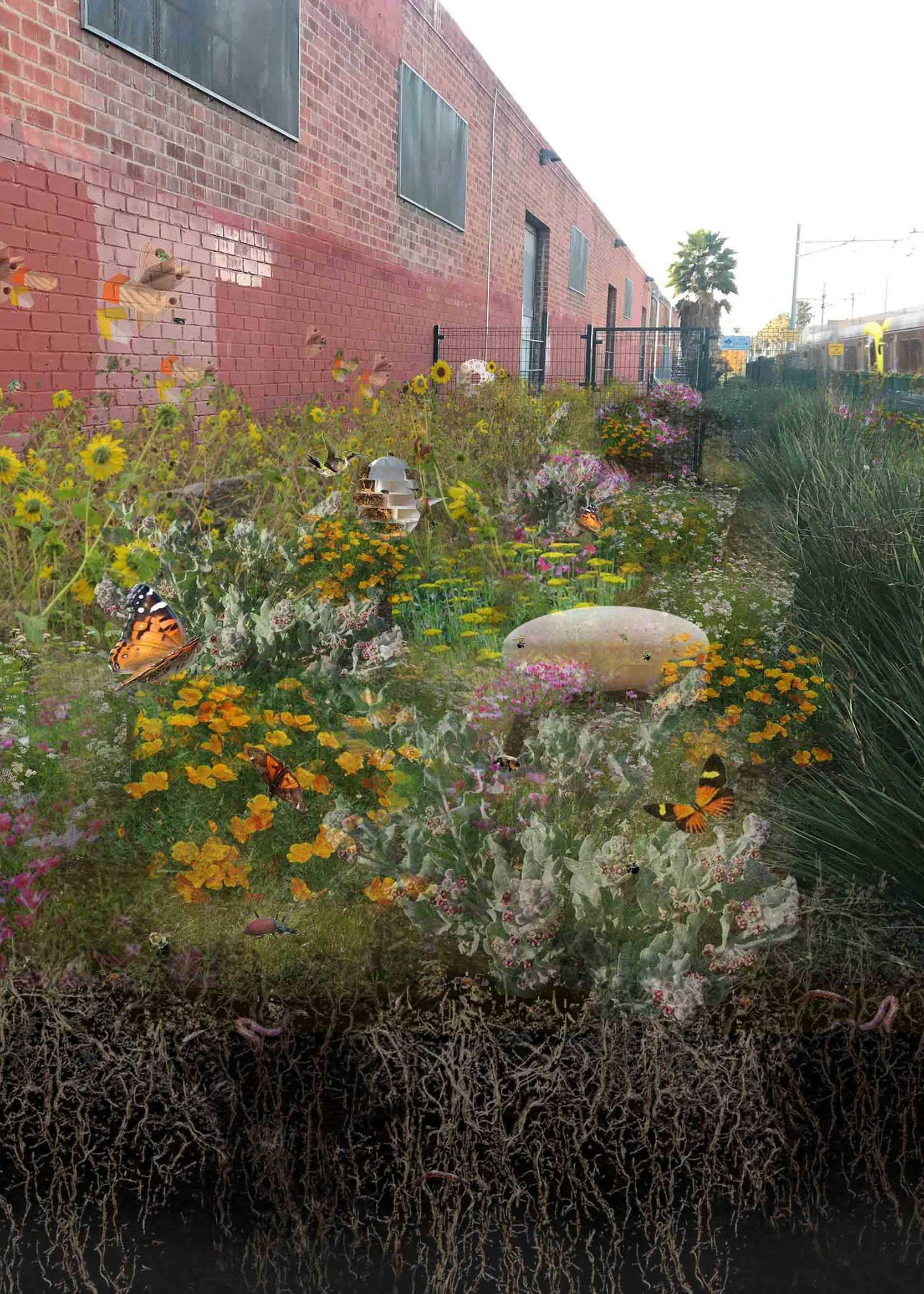 butterflies and flowers in urban backyard